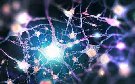 CLN5 Protein Loss in Batten Disease Led to Fewer Functional Neurons in Mouse Study