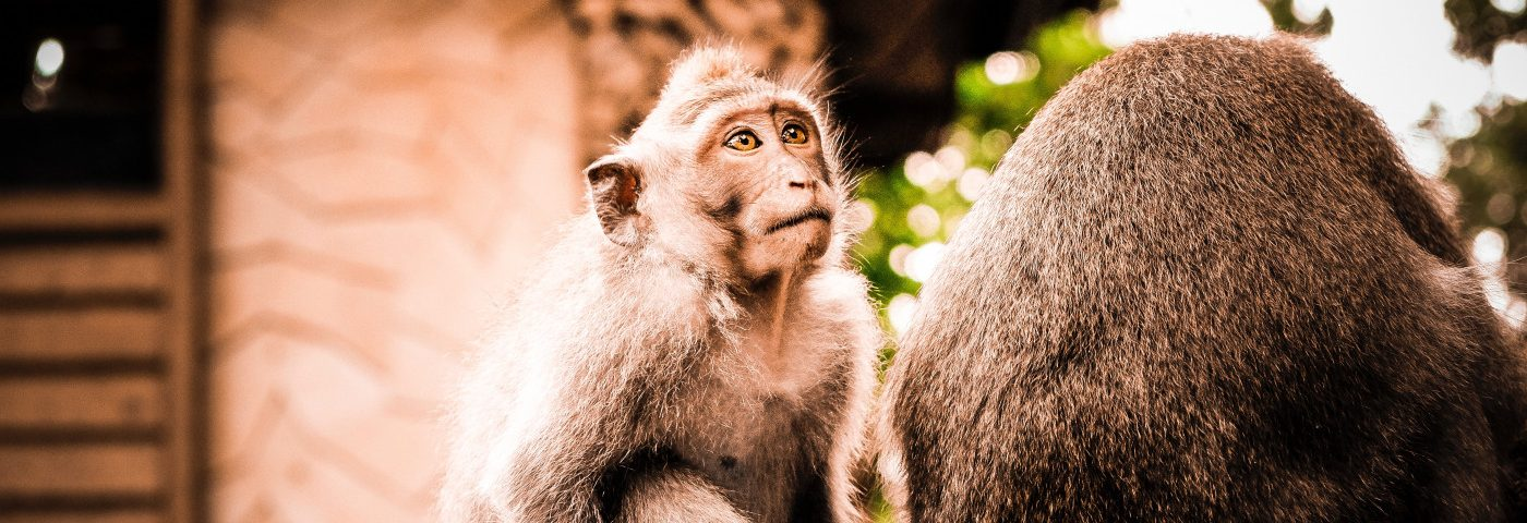Discovery of Natural CLN7 Model in Type of Monkey May Help Advance Understanding of Disease