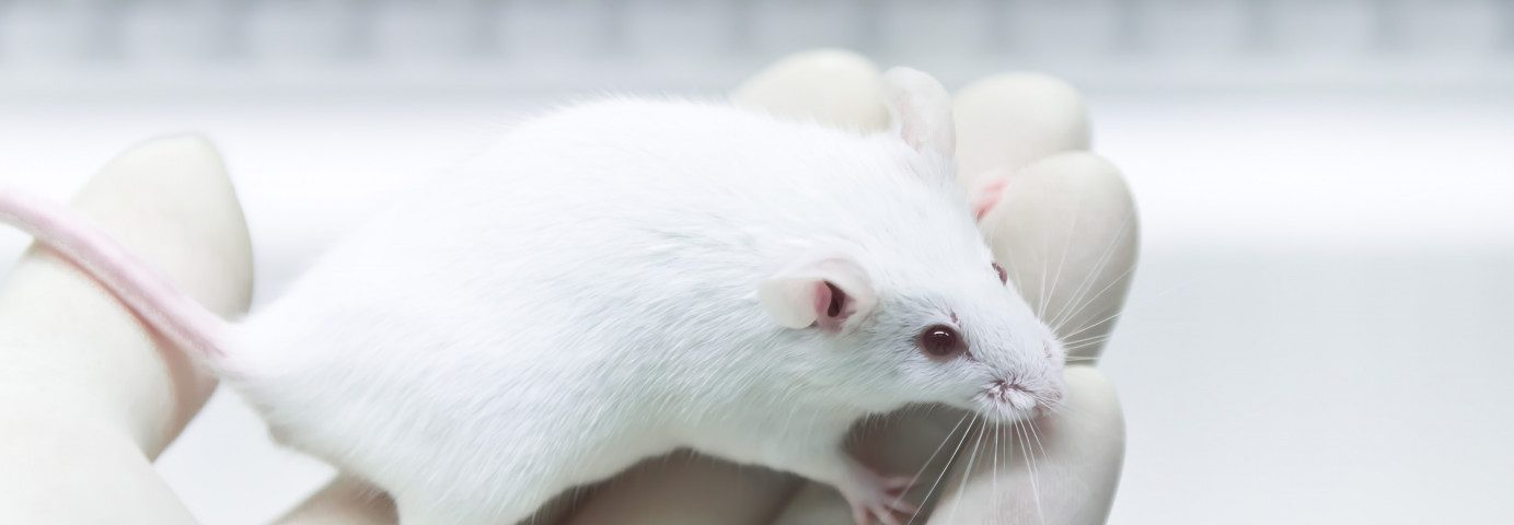 Complex Fat Molecule Seen to Aid Lifespan, Ease Neuron Loss in Juvenile Batten Animal Study