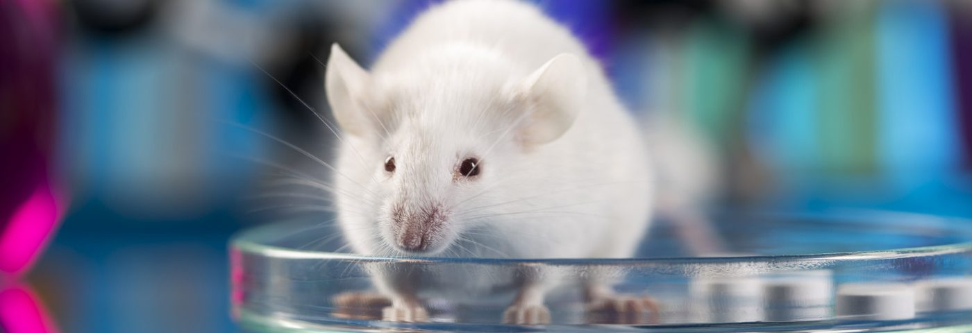 New Approach to Correct CLN3 Mutation Shows Promise in Juvenile Batten Disease Mouse Model